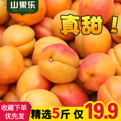 现货杏子5斤新鲜金太阳大黄杏酸甜时令应季水果批发仰韶贵妃杏3斤