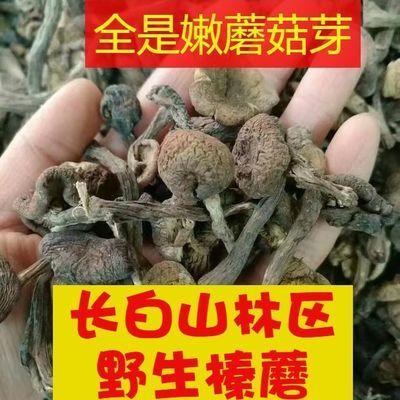 榛蘑 半斤250克 东北长白山新货野生榛蘑 干货 小鸡炖蘑菇100g