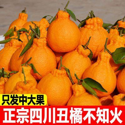 四川丑橘不知火10斤现摘现发新鲜丑八怪柑桔子水果2/5斤批发