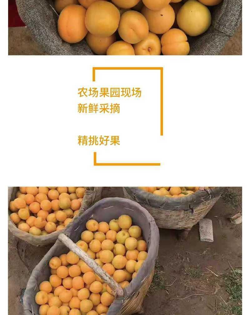 现摘新鲜水果陕西大黄杏应季孕妇水果金太阳杏子水果梅杏酸甜可口