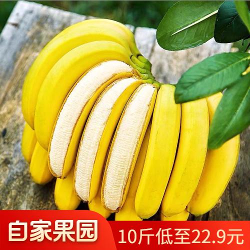 云南自然熟绿香蕉水果新鲜整箱批发应季水果9-10斤装非小米蕉一箱