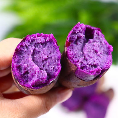 农家沙地紫薯新鲜地瓜水果紫心小番薯批发现挖板栗薯2/5/10斤包邮