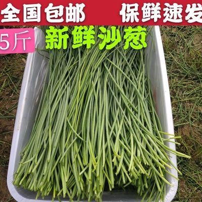 新鲜沙葱包邮蔬菜甘肃民勤小野葱不老菜包子饺子馅料保鲜发货