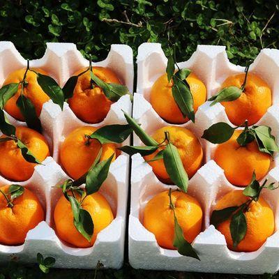 丑橘子丑八怪新鲜水果柑橘丑桔子耙耙柑丑柑丑橘2斤3斤5斤9斤