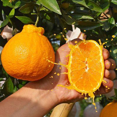 【抢10斤装】四川不知火丑橘丑桔丑八怪橘子水果新鲜应季水果2斤