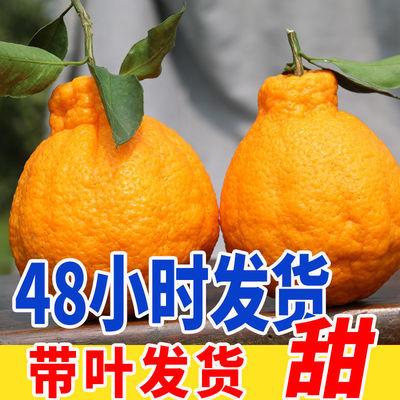 【好吃不上火】四川丑橘不知火丑柑新鲜桔子孕妇水果现摘丑八怪