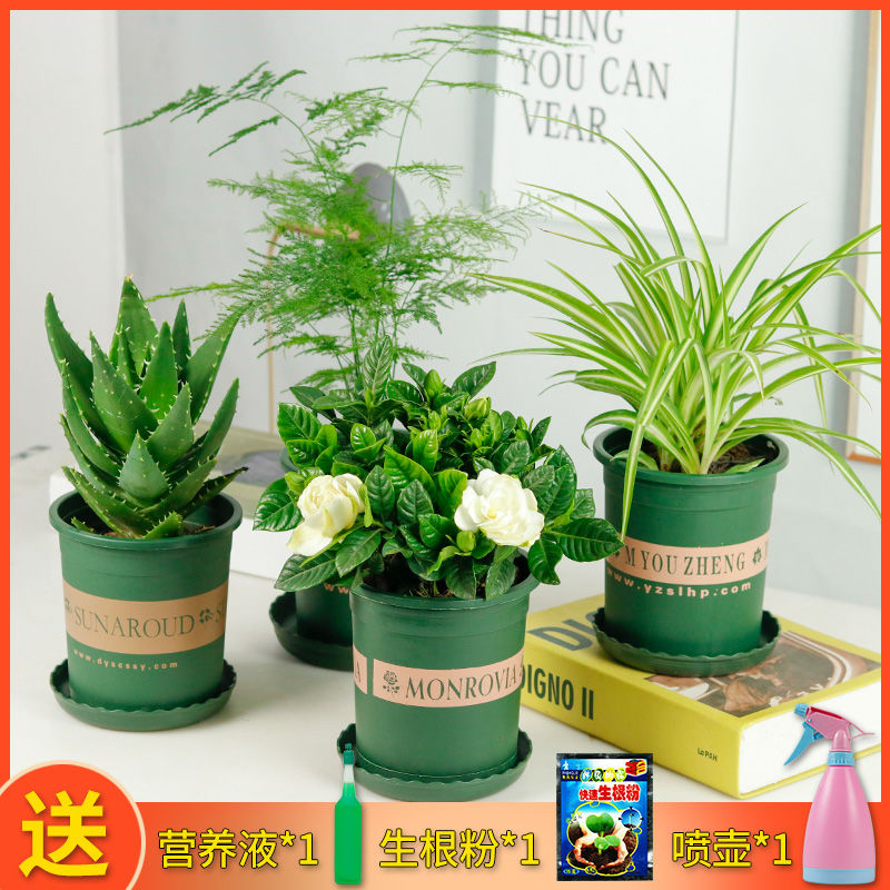 文竹办公室内小绿植盆栽栀子花卉水培吊兰芦荟巴西木多肉植物