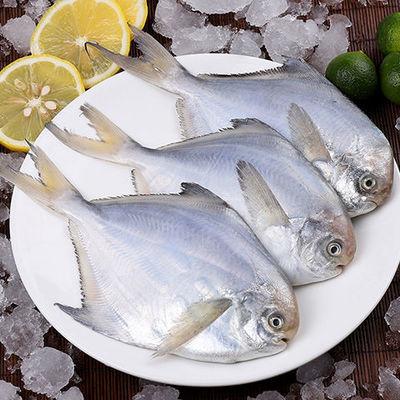 野生小银鲳鱼新鲜海鲜鲜活冷冻水产舟山深海白鲳鱼海鱼平鱼扁鱼