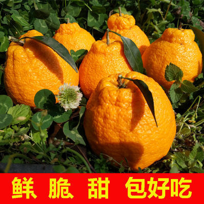 四川丑橘不知火10斤现摘现发新鲜丑八怪柑桔子水果2/5斤整箱