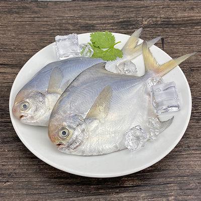 舟山小银鲳鱼 深海鳊鱼白鲳鱼平鱼扁鱼鲜活海捕新鲜冷冻海鲜水产