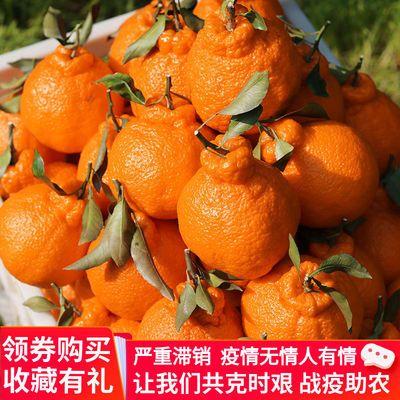 不知桔子新鲜四川柑批水果丑摘火丑孕妇丑当季丑八怪发现包邮橘子