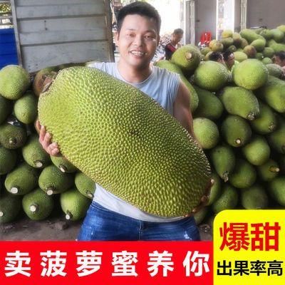 现摘发货 海南三亚菠萝蜜新鲜水果应当季热带木波罗蜜一整个包邮