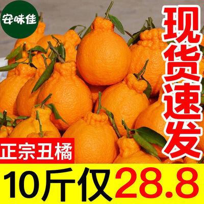 【丑橘批发】当季四川丑橘批发不知火丑柑丑八怪橘子新鲜桔子