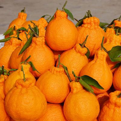 四川丑橘不知火10斤现摘现发新鲜丑八怪柑桔子水果2/5斤批发整箱