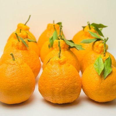 四川蒲江不知火丑柑丑桔字丑橘子当季水果新鲜采摘丑八怪包邮孕妇