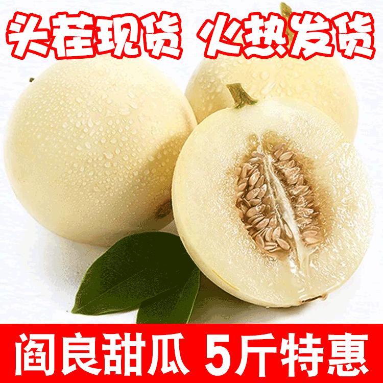 【现摘现发】陕西阎良甜瓜香瓜新鲜水果脆甜应季2斤/5斤/带箱10斤