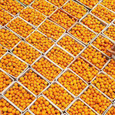 秭归夏橙薄皮橙子水果新鲜应季整箱批发现摘现发黄心多肉甜橙水果