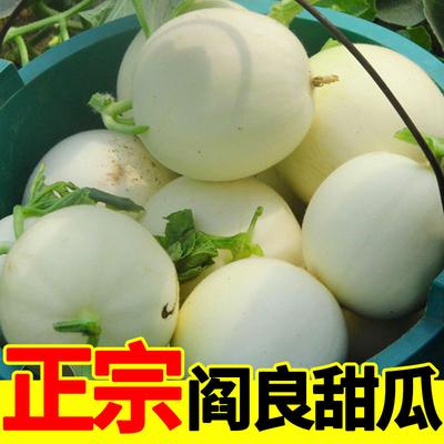 【现摘现发】陕西阎良甜瓜10斤新鲜应季水果批发(2-10斤)多规格