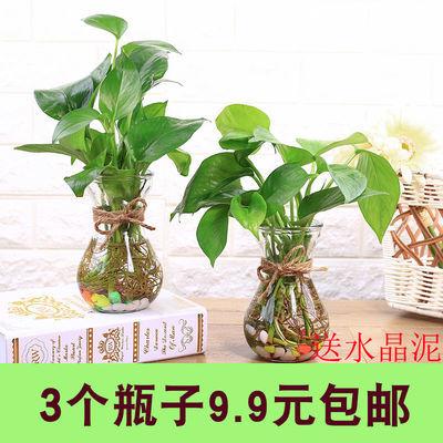 简约水培绿萝花瓶水培植物玻璃瓶透明花瓶风信子铜钱草花盆小花瓶
