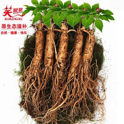 特大新鲜人参一斤500g/半斤250克 长白山带土鲜参 煲汤泡酒