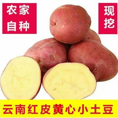 【云南小土豆@3/5/10斤红皮 黄心小土豆高原马铃薯花青素洋芋烧烤