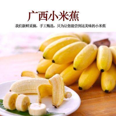 广西小米蕉新鲜水果包邮整箱应季小米蕉现摘水果新鲜 整箱水果。