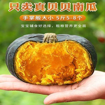 【正品贝贝南瓜】新鲜包邮迷你小南瓜板栗味南瓜宝宝辅食进口种源