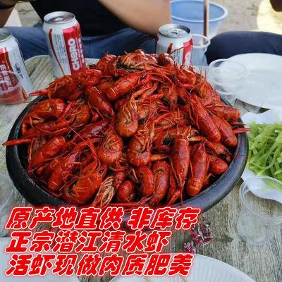 潜江熟食十三香麻辣小龙虾加热开袋即食虾仁虾皮香辣海鲜鲜活龙虾