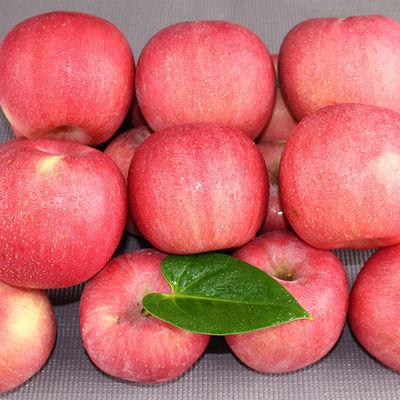 陕西苹果红富士精品现摘不打蜡苹果水果脆甜当季新鲜水果苹果批发
