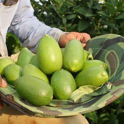 青柠檬香水柠檬无籽海南台湾四季新鲜水果批发产地直销包邮柠檬片