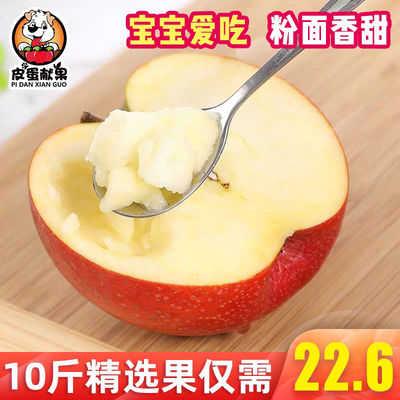 新鲜水果 10斤 陕西 秦冠苹果