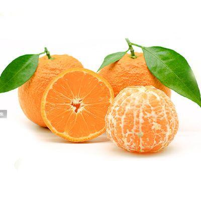 【精选推荐】四川黄果柑新鲜应季水果带箱非不知火丑橘耙耙柑10斤