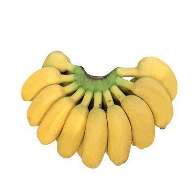 【热卖37万件】广西 小米蕉9斤/5斤/3斤小鸡蕉/米蕉/小香蕉芭蕉