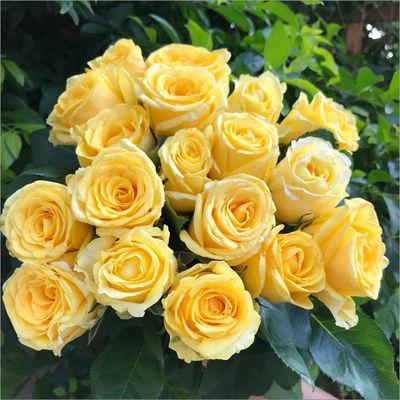 热销云南昆明基地直发玫瑰花真花鲜花花束速递同城家用水养花配送