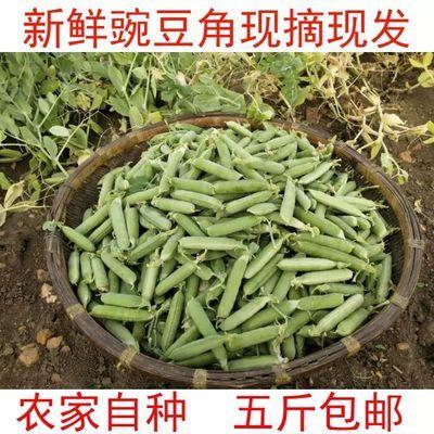 新鲜豌豆带壳豌豆荚生甜豆宛豆蜿豆蔬菜婉豆角散装1/3/5斤碗豆