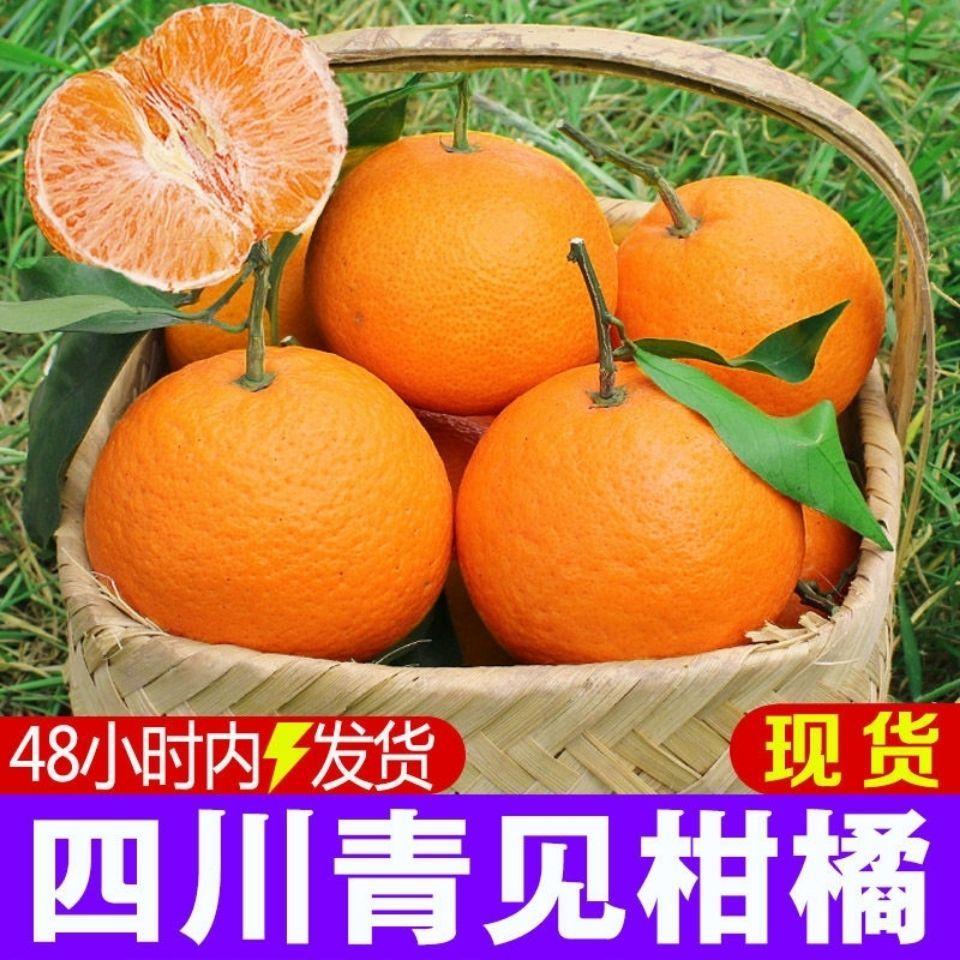 【爆汁青见】四川青见柑橘果冻橙手剥橙当季新鲜水果包邮批发