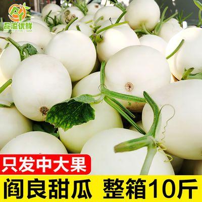 现摘陕西阎良甜瓜10斤应季新鲜水果香瓜白皮脆瓜5/3斤2个整箱批发
