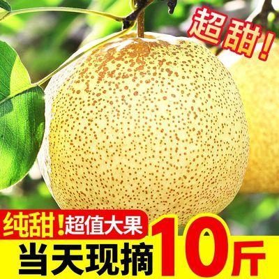 梨子新鲜10斤整箱砀山梨酥梨皇冠梨雪梨应季水果当季包邮鸭梨贡梨