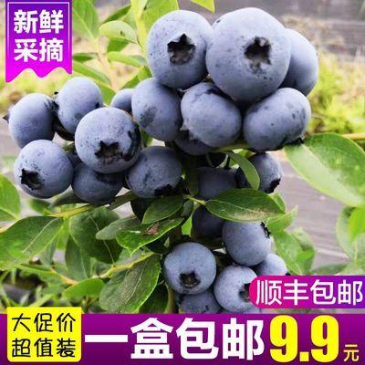 【现货】现摘现发蓝莓鲜果新鲜水果包邮当季蓝梅应季特产兰梅
