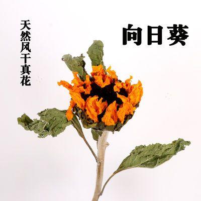 向日葵干花 天然真花小雏菊 拍摄道具北欧风摆设家居装饰客厅插花