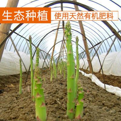 自发现农家采优质自产】新鲜产【蔬菜绿白根芦笋现新鲜去龙须龙须