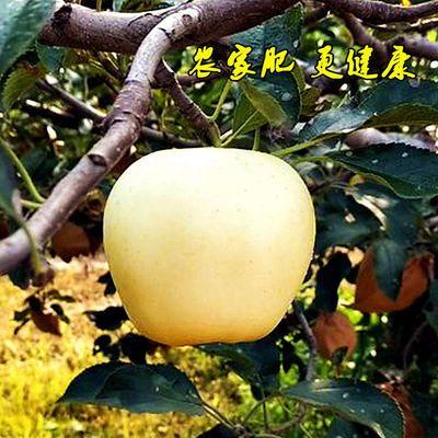 刮蛇果元帅帅黄新鲜黄金整箱粉面粉5斤当季泥黄香蕉包邮水果苹果