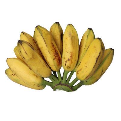 大蕉芭蕉plantain广东新鲜水果无催熟剂香蕉2/3/5斤单果80-300g