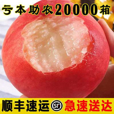 【顺丰包邮】桃子水果 一整箱3/5斤新鲜血脆毛桃水蜜桃孕妇应当季
