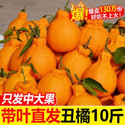 四川丑橘不知火丑八怪橘子新鲜孕妇水果当季桔子柑橘丑柑丑桔批发