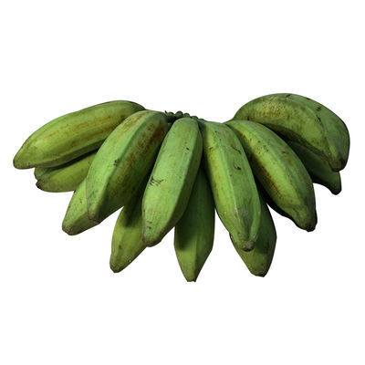 广东芭蕉大蕉高蕉plantain新鲜水果无催熟剂香蕉3/5斤单果80-300g