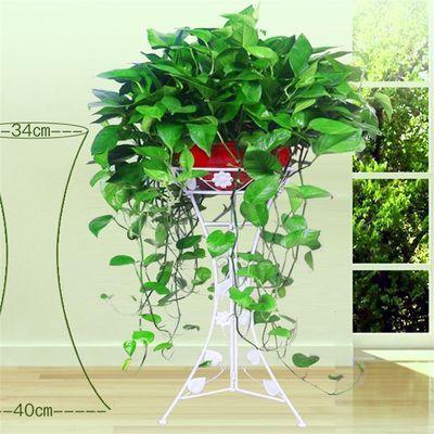 大盆绿萝盆栽除甲醛客厅吸水盆水培花卉防辐射植物大绿箩办公室内