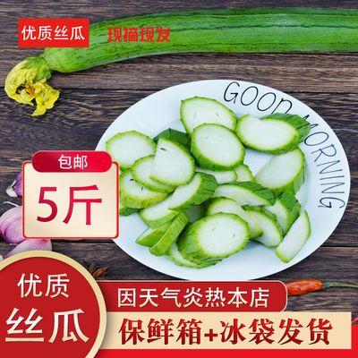 正常发货》寿光新鲜丝瓜下奶丝瓜孕妇丝瓜农家菜新鲜蔬菜现摘现发