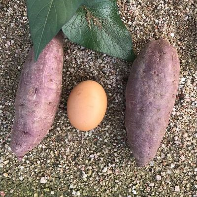 新鲜蔬菜农家小紫薯甜糯沙地山芋香地瓜番薯香紫心种自现挖红薯