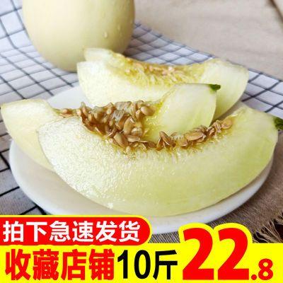 现摘白皮阎良甜瓜10斤陕西应季新鲜水果香瓜脆瓜批发非绿宝羊角蜜